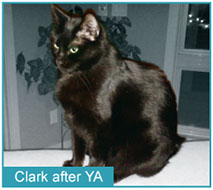 Clark after eating Young Again ZERO Cat Food.