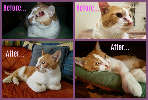 Before and after pictures of cat Jake.
