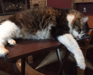 Maine Coon cat sleeping on table