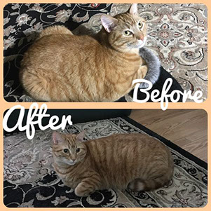 Before and after pictures of Mr. Darcy.
