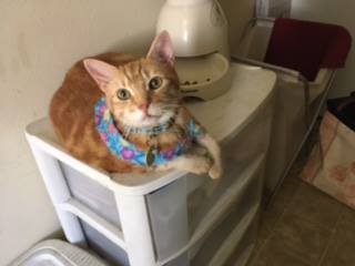 Orange tabby cat sitting on end table.