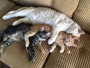 Three cats laying together on a couch